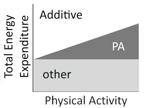 Recovery-Driven Fitness
