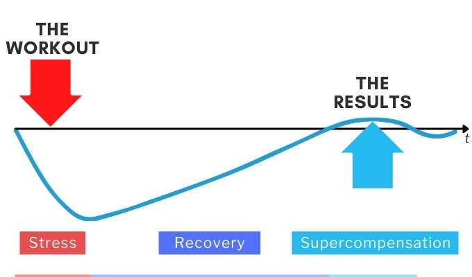 stress and recovery lead to supercompensation